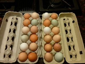 Eggs from Seabreeze Hens